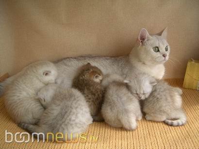 смотреть кошки фото
